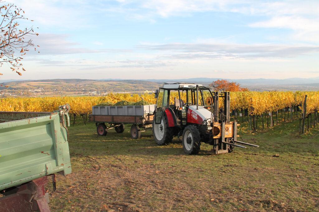 weingarten mit traktor